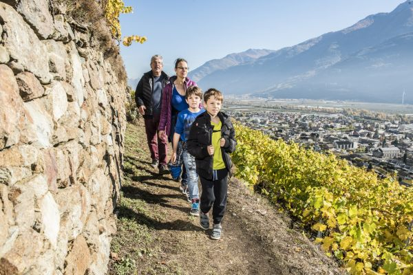 Vines and grower's huts trail – Fully
