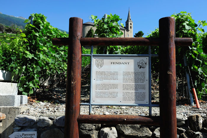 Vineyards Trail in Conthey